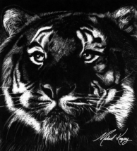 Tiger_by_Michael_Kingery