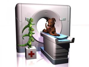 Iguana_Dog_CT_Scan_7-09